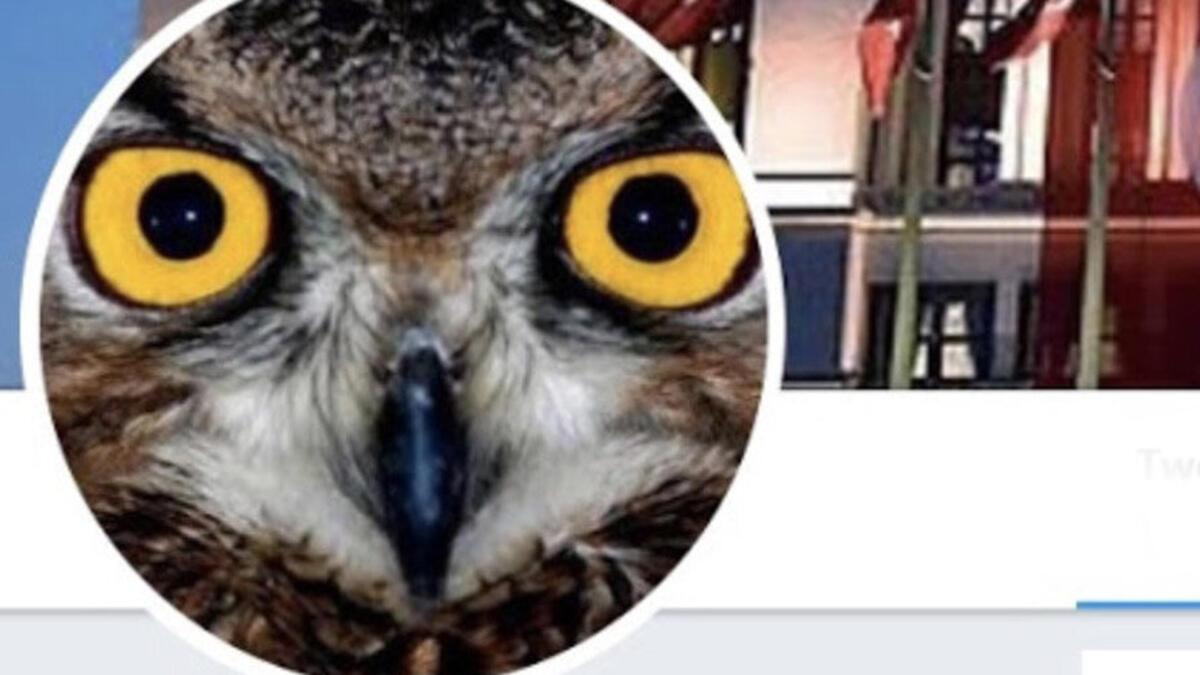 Twitter'daki Fenomen Ankara Kuşu kimdir? Ankara Kuşu Oktay Yaşar?