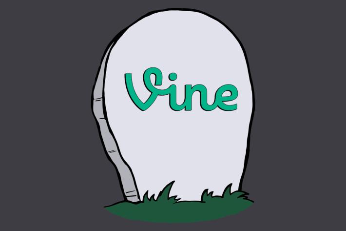 Vine'ın dönüşümü için geri sayım başladı, Elinizi çabuk tutun ve yedek alın!